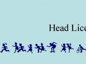 Head Lice Head Lice A Lousy Problem Remember