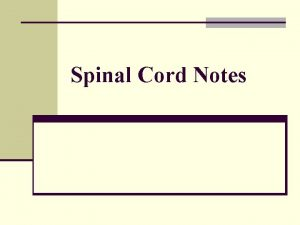 Spinal Cord Notes ANATOMY OF SPINAL CORD n
