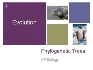 Evolution Phylogenetic Trees AP Biology Phylogenetic Trees By
