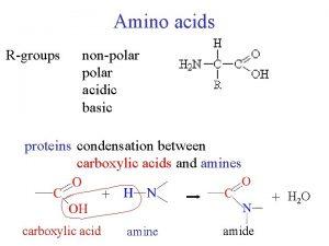 Amino acids Rgroups nonpolar acidic basic proteins condensation