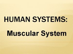 HUMAN SYSTEMS Muscular System MUSCLE Muscle cells have