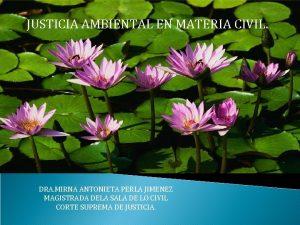 JUSTICIA AMBIENTAL EN MATERIA CIVIL DRA MIRNA ANTONIETA