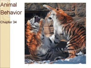 Animal Behavior Chapter 34 What is a behavior
