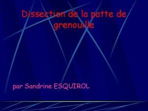 Dissection de la patte de grenouille par Sandrine