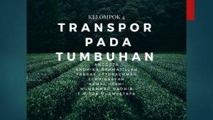 Mekanisme Transportasi Mekanisme transportasi yang terjadi pada tumbuhan