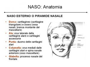 NASO Anatomia NASO ESTERNO O PIRAMIDE NASALE Dorso