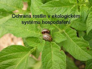 Ochrana rostlin v ekologickm systmu hospodaen Ochrana rostlin