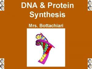 DNA Protein Synthesis Mrs Bottachiari DNA Protein Synthesis