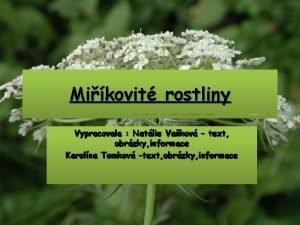 Mikovit rostliny Vypracovala Natlie Vakov text obrzky informace