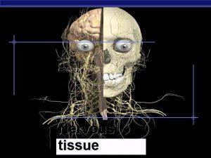 AP Biology Nervous tissue Nervous System CNS PNS