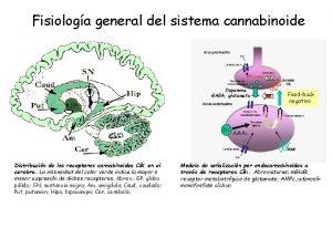 Fisiologa general del sistema cannabinoide Dopamina GABA glutamato