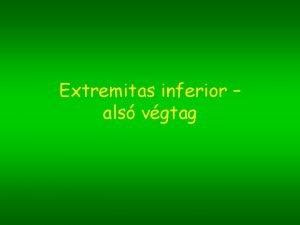 Extremitas inferior als vgtag Fggesztv szabad vgtag medencev