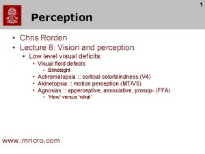 1 Perception Chris Rorden Lecture 8 Vision and