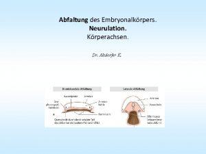 Abfaltung des Embryonalkrpers Neurulation Krperachsen Dr Altdorfer K