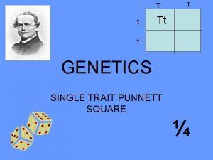 T t T Tt t GENETICS SINGLE TRAIT
