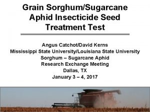 Grain SorghumSugarcane Aphid Insecticide Seed Treatment Test Angus