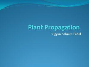 Plant Propagation Vigyan Ashram Pabal Plant Propagation New