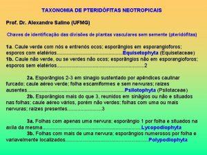 TAXONOMIA DE PTERIDFITAS NEOTROPICAIS Prof Dr Alexandre Salino