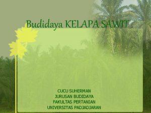 Budidaya KELAPA SAWIT CUCU SUHERMAN JURUSAN BUDIDAYA FAKULTAS