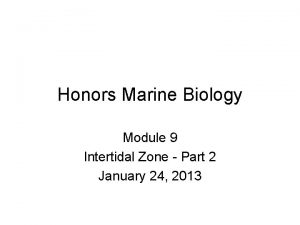 Honors Marine Biology Module 9 Intertidal Zone Part