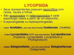LYCOPSIDA Seus representantes possuem esporfitos com razes caules