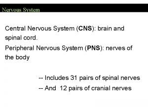 Nervous System Central Nervous System CNS brain and