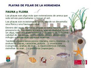 PLAYAS DE PILAR DE LA HORADADA FAUNA y