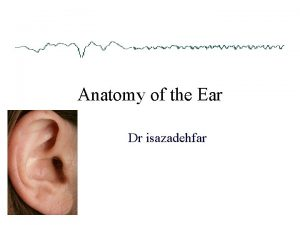 Anatomy of the Ear Dr isazadehfar Major Divisions