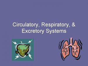 Circulatory Respiratory Excretory Systems Bellwork 31615 List the