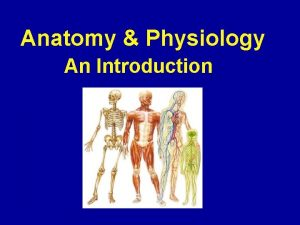 Anatomy Physiology An Introduction An Overview of Anatomy