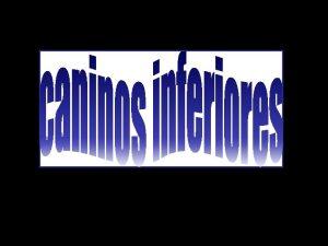 MEDIDAS CANINO INFERIOR ALTURA DE LA CORONA DIAMETRO