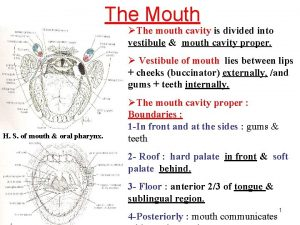 The Mouth The mouth cavity is divided into