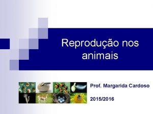 Reproduo nos animais Prof Margarida Cardoso 20152016 Reproduo