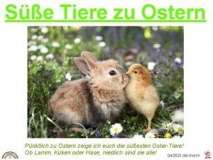 Se Tiere zu Ostern Pnktlich zu Ostern zeige