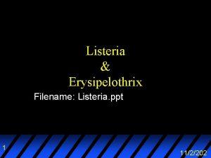 Listeria Erysipelothrix Filename Listeria ppt 1 112202 Outline