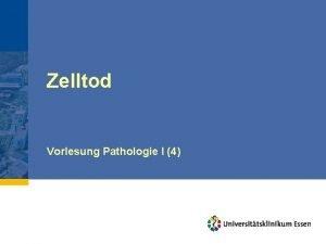Zelltod Vorlesung Pathologie I 4 Zelltod Irreversibles Endstadium