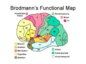 Brodmanns Functional Map Cortical Layers Vision Illusions Gallery