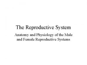 The Reproductive System Anatomy and Physiology of the