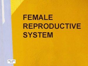 FEMALE REPRODUCTIVE SYSTEM OVARIES Female gonads produce oocytes