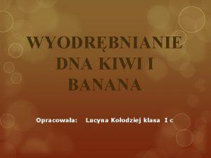 WYODRBNIANIE DNA KIWI I BANANA Opracowaa Lucyna Koodziej