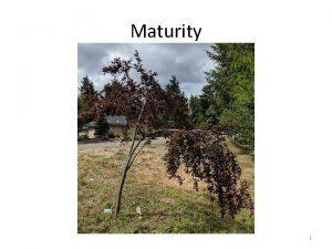 Maturity 1 Maturity 2 Maturity Col 4 12
