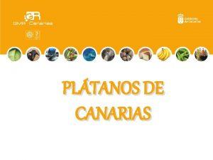 PLTANOS DE CANARIAS Hola soy army y os