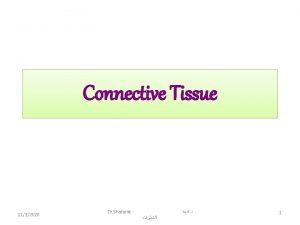 Connective Tissue 1132020 Dr Shatarat 1 Connective Tissue