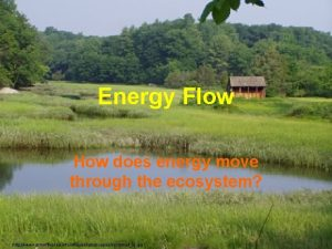 Energy Flow How does energy move through the