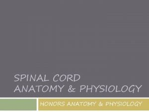 SPINAL CORD ANATOMY PHYSIOLOGY HONORS ANATOMY PHYSIOLOGY Spinal