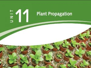 PLANT PROPAGATION The creation of new life Propagation