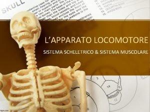 LAPPARATO LOCOMOTORE SISTEMA SCHELETRICO SISTEMA MUSCOLARE IL SISTEMA