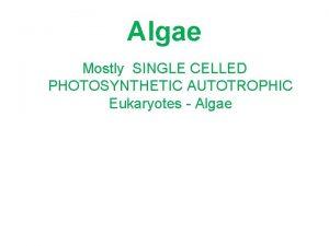 Algae Mostly SINGLE CELLED PHOTOSYNTHETIC AUTOTROPHIC Eukaryotes Algae