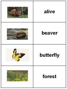alive beaver butterfly forest uhlive adjective alive beaver