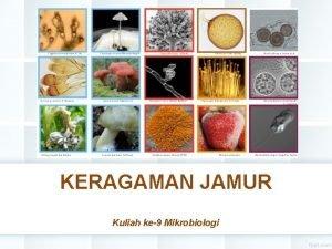 KERAGAMAN JAMUR Kuliah ke9 Mikrobiologi PENDAHULUAN Kingdom Jamur